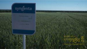 Компания Сингента. Новейшие достижения для выращивания урожая без потерь + видео журнал АгроМЕРА