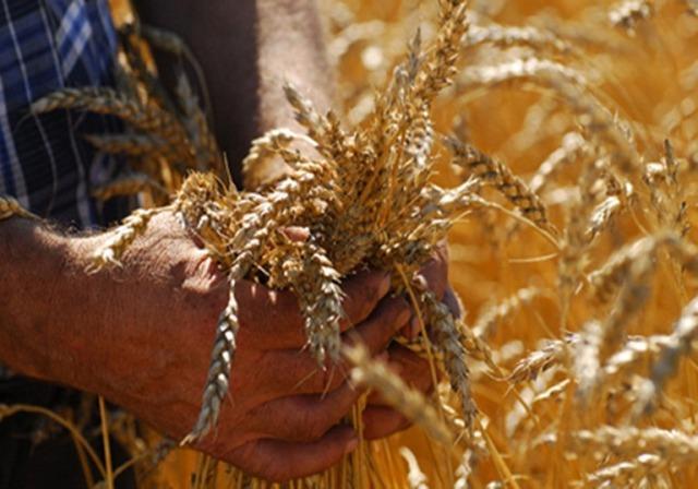 2015 год для российского зернового рынка является годом возможностей