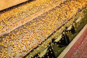 Минсельхоз планирует снизить зависимость от зарубежных семян