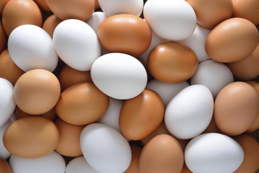 На Ставрополье поддержат яичное птицеводство