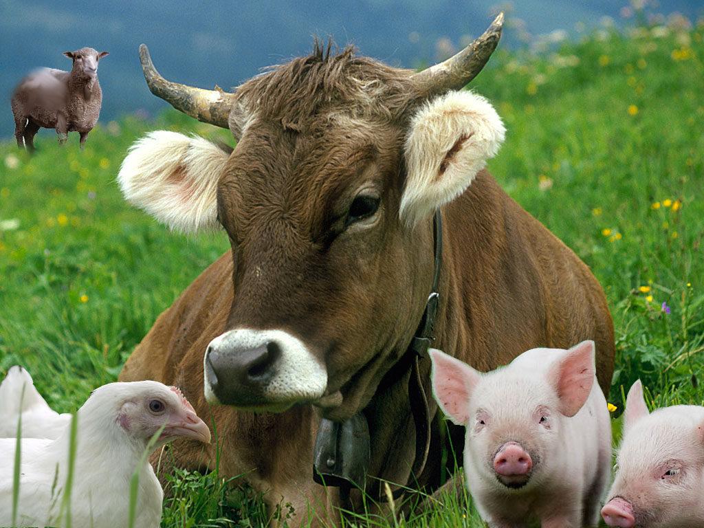 Животноводческие хозяйства Рязанской области приступили к заготовке силоса