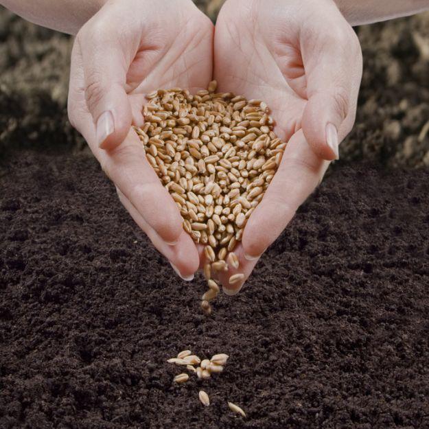 «Сингента» начала строительство Института защиты семян