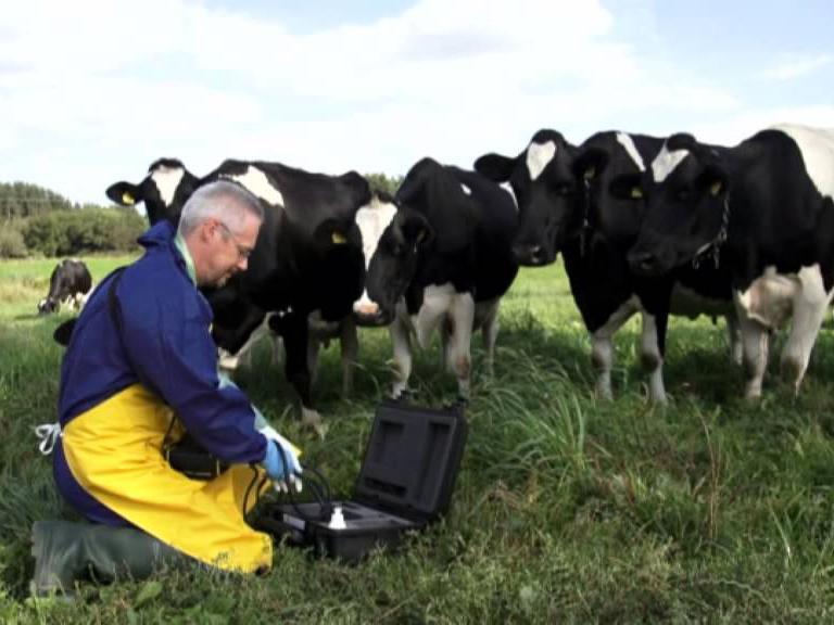 УЗИ-диагностика сельскохозяйственных животных – незаменимый помощник в развитии хозяйства
