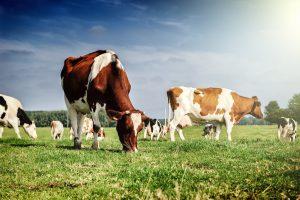 Государство расширит меры поддержки молочной отрасли в 2019 году