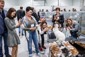 Южно-Российский региональный конкурс кроликов и породной птицы состоится 23-24 октября