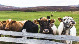 «АГРОФАРМ-2020» на ВДНХ: ведущие эксперты обсудят вопросы ветеринарного благополучия крупного и малого рогатого скота