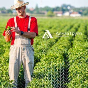 В рамках программы импортозамещения Алмаз Групп на 30% увеличил поставки удобрений российским аграриям