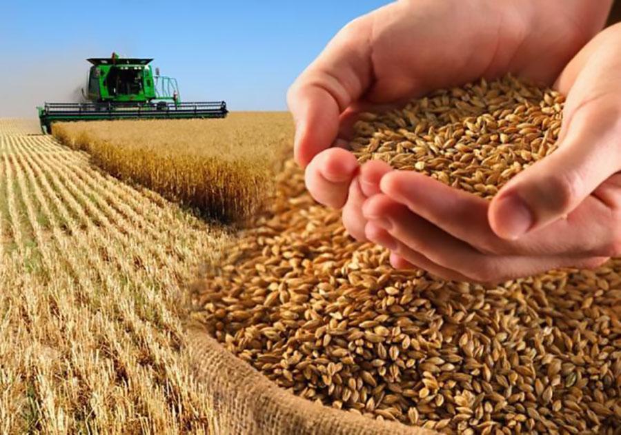 Урожай-2020: держать или продавать?