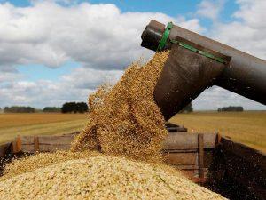 Государство решило взять рынок зерна под полный контроль.